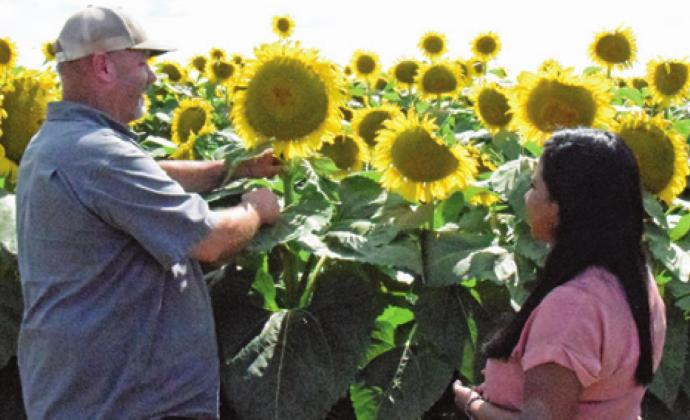 JAY WILDER SHOWS Caldwell resident Andrea Romero the sunflower head. The seeds of the sunflower head will be used in H-E-B store brand bird seed. -- Tribune photo by Lani Pieper